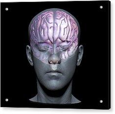 Normal Brain Acrylic Print by Zephyr
