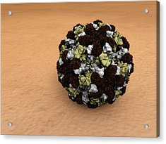 Norovirus Particles Acrylic Print