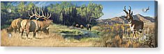 North American Waterhole Acrylic Print