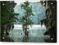 North Florida Cypress Swamp Acrylic Print by Rich Leighton