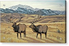 North Of Yellowstone Acrylic Print