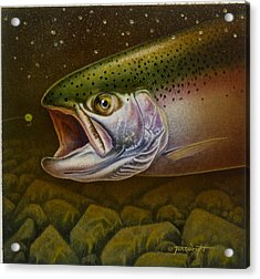 North Shore Steelhead Acrylic Print by Jon Q Wright