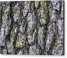North-side Oak Bark Acrylic Print by John Wartman