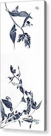 Northern Bluebells Acrylic Print by Priska Wettstein