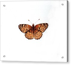 Northern Checkerspot Butterfly Acrylic Print by Inger Hutton