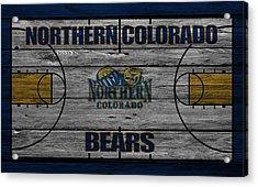 Northern Colorado Bears Acrylic Print by Joe Hamilton