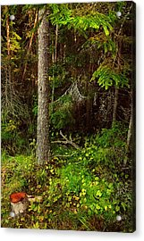 Northern Forest 1 Acrylic Print by Jenny Rainbow