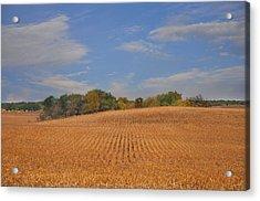 Northwest Iowa Golden Corn Field Acrylic Print