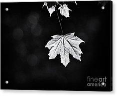 Norway Maple Leaf Monochrome Acrylic Print