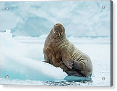 Norway Svalbard Nordaustlandet Island Acrylic Print