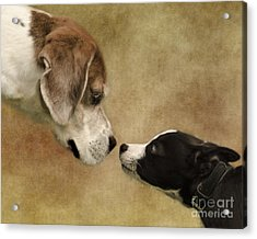 Nose To Nose Dogs Acrylic Print