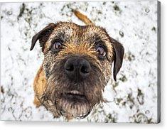 Nosey Dog. Acrylic Print