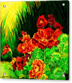 Nosturtiums Acrylic Print by Synnove Pettersen