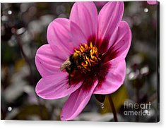 Acrylic Print featuring the photograph Nosy Bumble Bee by Scott Lyons