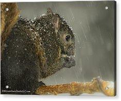 Not Again Squirrel Acrylic Print by LeeAnn McLaneGoetz McLaneGoetzStudioLLCcom