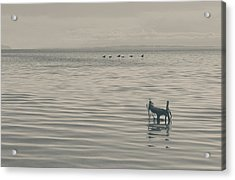 Not All Endings Are Happy Acrylic Print by Laurie Search