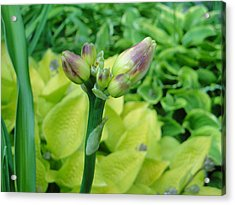 Not Always About The Bloom Acrylic Print by Suzanne Perry