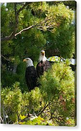 Acrylic Print featuring the photograph Not Listening by Brenda Jacobs