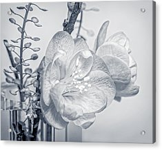 Acrylic Print featuring the photograph Not Quite Black And White by Len Romanick