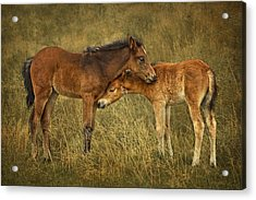 Acrylic Print featuring the photograph Not So Wild Wild Horses by Priscilla Burgers