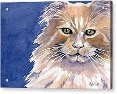 Not Too Happy Acrylic Print by Marsha Elliott