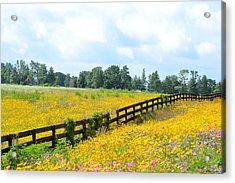 Notch In The Fence Wild Flowers Acrylic Print