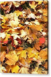 Acrylic Print featuring the photograph Nothing But Leaves by Mike Ste Marie