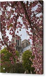 Notre Dame 1 Acrylic Print by Art Ferrier