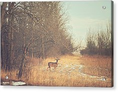 November Deer Acrylic Print by Carrie Ann Grippo-Pike