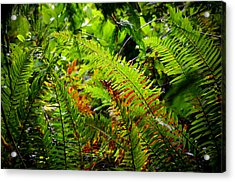 Acrylic Print featuring the photograph November Ferns by Adria Trail