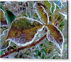 November_ Last Walz Acrylic Print by AmaS Art