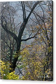 November Morning Acrylic Print by Melissa Stoudt