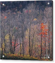 November Woods Acrylic Print by Alan L Graham