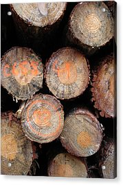Number Logs Acrylic Print by Michel Mata