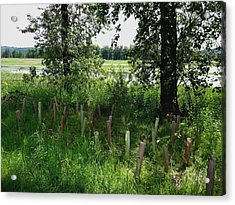 Nurturing Trees To Grow Acrylic Print by Lizbeth Bostrom
