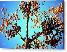 Acrylic Print featuring the photograph Nuts And Berries by Matt Harang