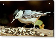 Nuts For The Nuthatch Acrylic Print by Rosanne Jordan