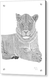 Nyah The Lioness Acrylic Print by Patricia Hiltz