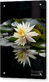 Nymphaea Maria And Reflection Acrylic Print
