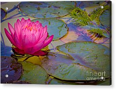 Nymphaeaceae Acrylic Print by Inge Johnsson