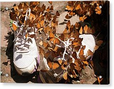 Nymphalid Butterflies Salt Puddle Feeding Acrylic Print by Paul D Stewart