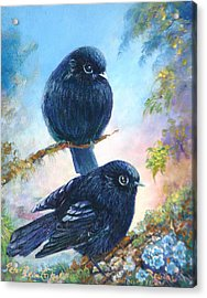 Nz Black Robins Acrylic Print by Peter Jean Caley