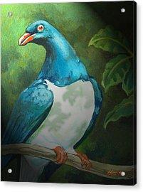 Nz Native Pigeon Kereru Acrylic Print by Patricia Howitt