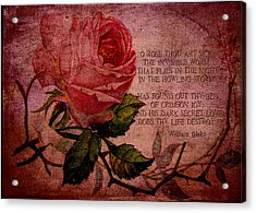 O Rose Thou Art Sick Acrylic Print by Sarah Vernon