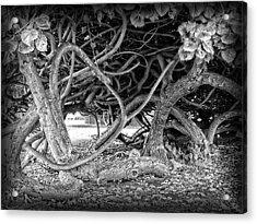 Oahu Ground Vines - Hawaii Acrylic Print by Daniel Hagerman