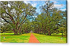 Oak Alley 3 Oil Acrylic Print by Steve Harrington