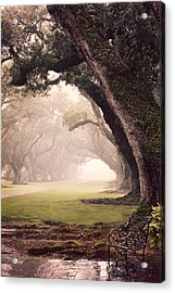 Oak Alley Acrylic Print