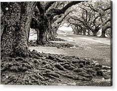Oak Alley Acrylic Print by William Beuther