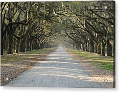 Acrylic Print featuring the photograph Oak Avenue by Bradford Martin