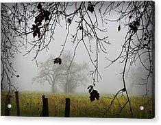 Oak Dreams Acrylic Print